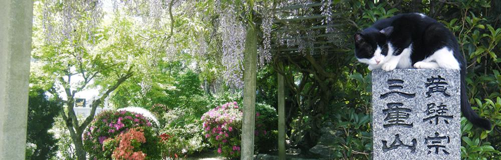 円城寺の庭