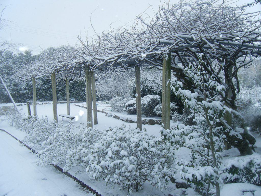 冬の円城寺